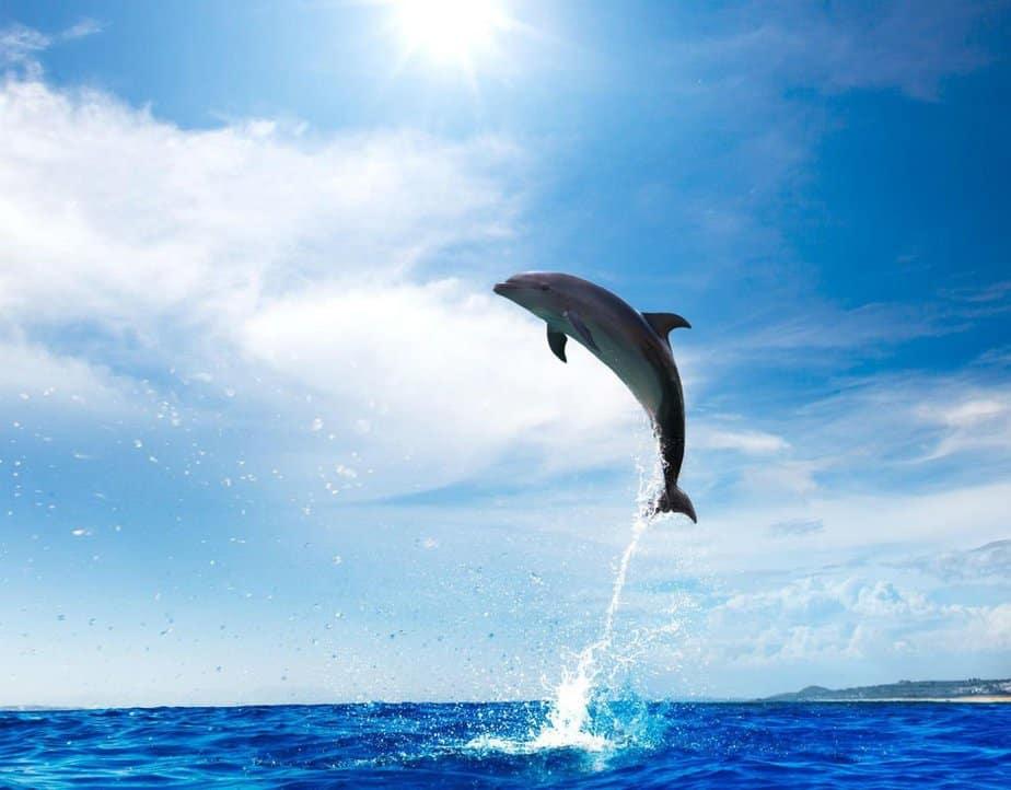 slide-dolfijn1